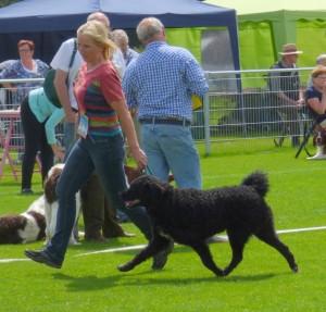 Jachthondenshow Papendal en vaderdag