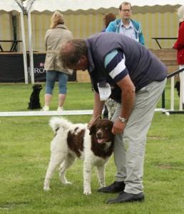 Jarig: pups van Simmer Blomke en Murk