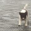 Rimke op een hondenstrand