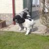 Marije en Dukke spelen graag samen
