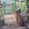 Ayke mag even niet mee helpen in  de tuin