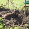 Ayke wil wel graag werken in de tuin