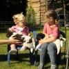 Een dameskransje met pups