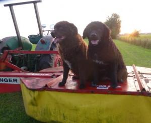 JARIG! De pups van Mearke en Jarich.