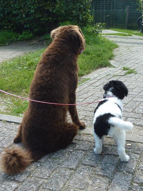Nestvlieders pups Mearke & Jarich