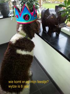 """Jarig: de """"pups""""van Mare Dieke en Perkins fan de Gauster Hoppen!"""