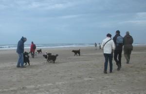 nestvlieders Mearke: wandeling aan Zee