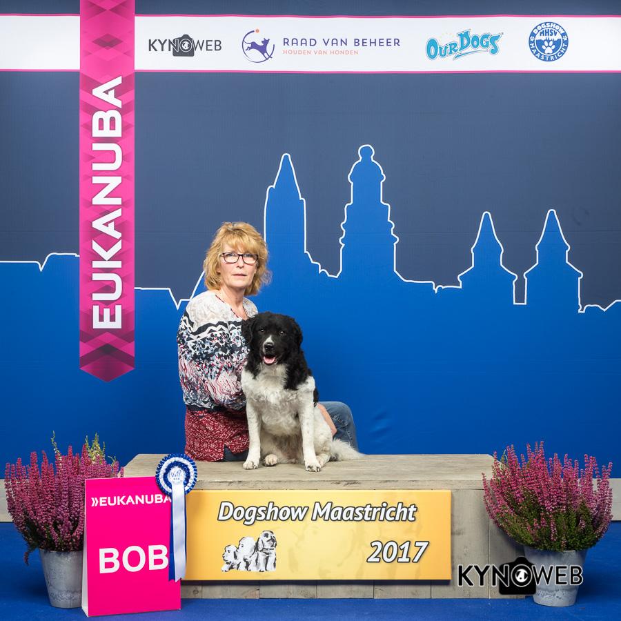 Show Zwolle, Maastricht,Echt  en Rotterdam. Wub Sterre was en is de ster.