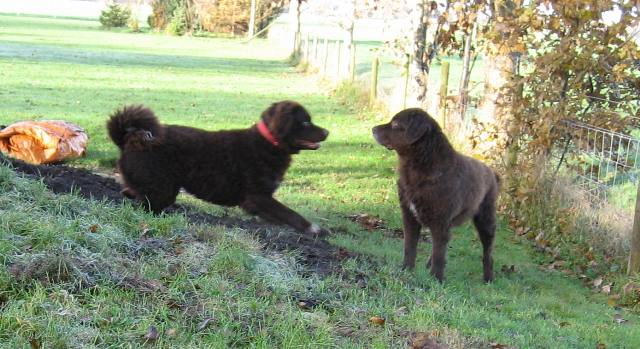 """Jarig: de """"pups""""van Mearke en Jarich!"""