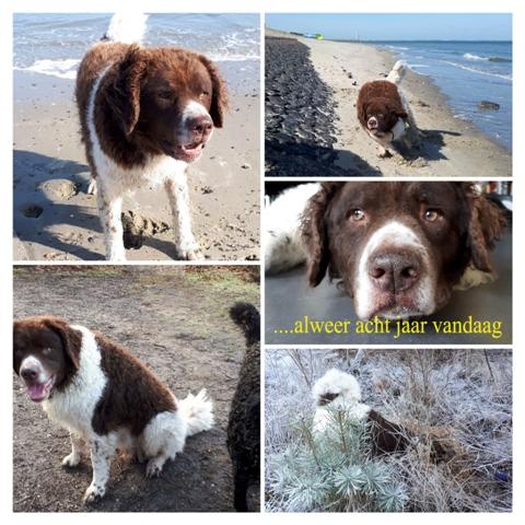 Jarig: de pups van Mare Dieke fan de Frije Wetters en Perkins