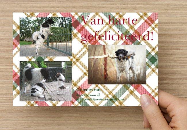 Jarig: de pups van Adelgonda Dukke en Jarich!