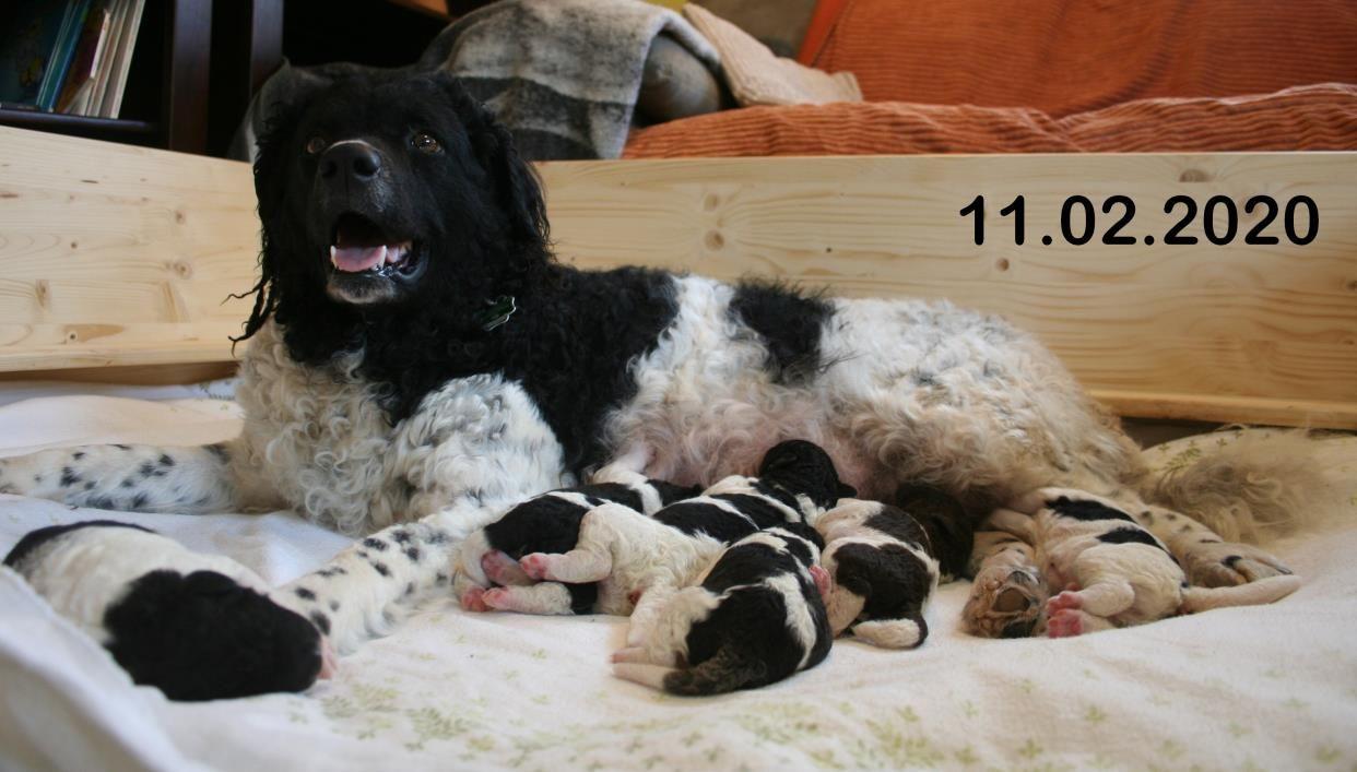 Pups beschikbaar.
