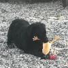 Maartje Marie met een kip