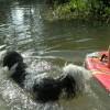Waldo gaat alvast weer zwemmen