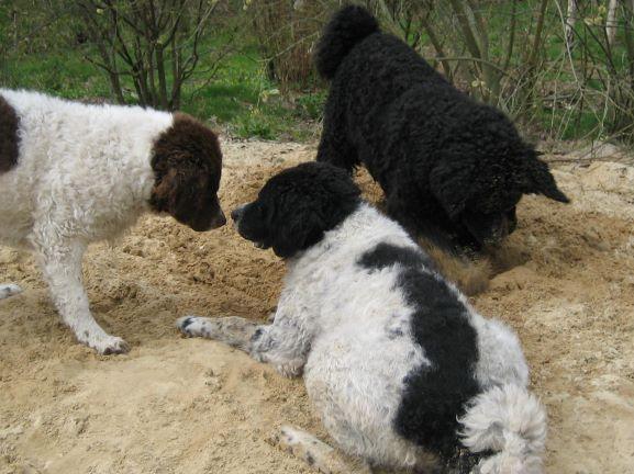 """Jarig: De """"pups"""" van Marije en Durk."""
