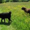 Brun en mem Mearke